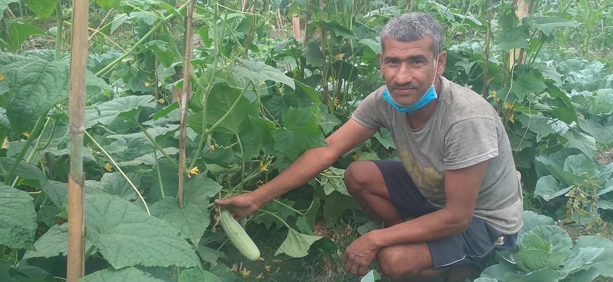 खाडीमा भएन कमाइ : गाउँ फर्केर तरकारी खेती